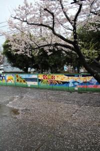 博物館裏の桜の様子