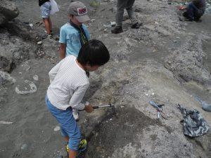 貝化石を探すこどもたち