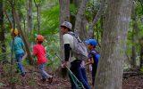 林の中でセミのぬけがらを探す子どもたち