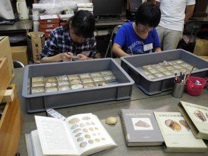 貝殻資料のラベルを作成する実習生たち