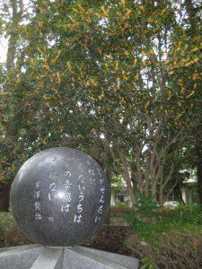 宮澤賢治の碑とその奥で満開を迎えるキンモクセイ
