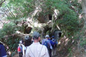 楊谷寺谷戸横穴墓群を観察する参加者