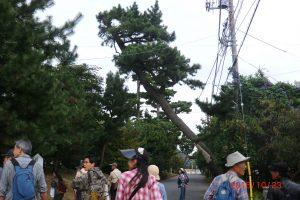 東海道を歩く参加者