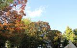 紅葉が始まった文化公園のケヤキやイチョウ