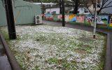 草地に雪が積もってまるでシロツメクサが咲いているよう