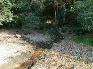 段丘崖の下に見られる湧水