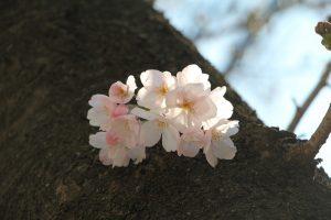 幹に咲いた花のクローズアップ