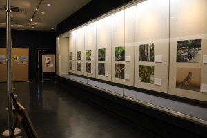特別展示室の様子