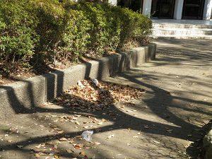 公園の隅に掃き寄せられた落ち葉