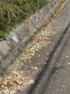 道路わきに多くのクスノキの落ち葉が吹き寄せられている