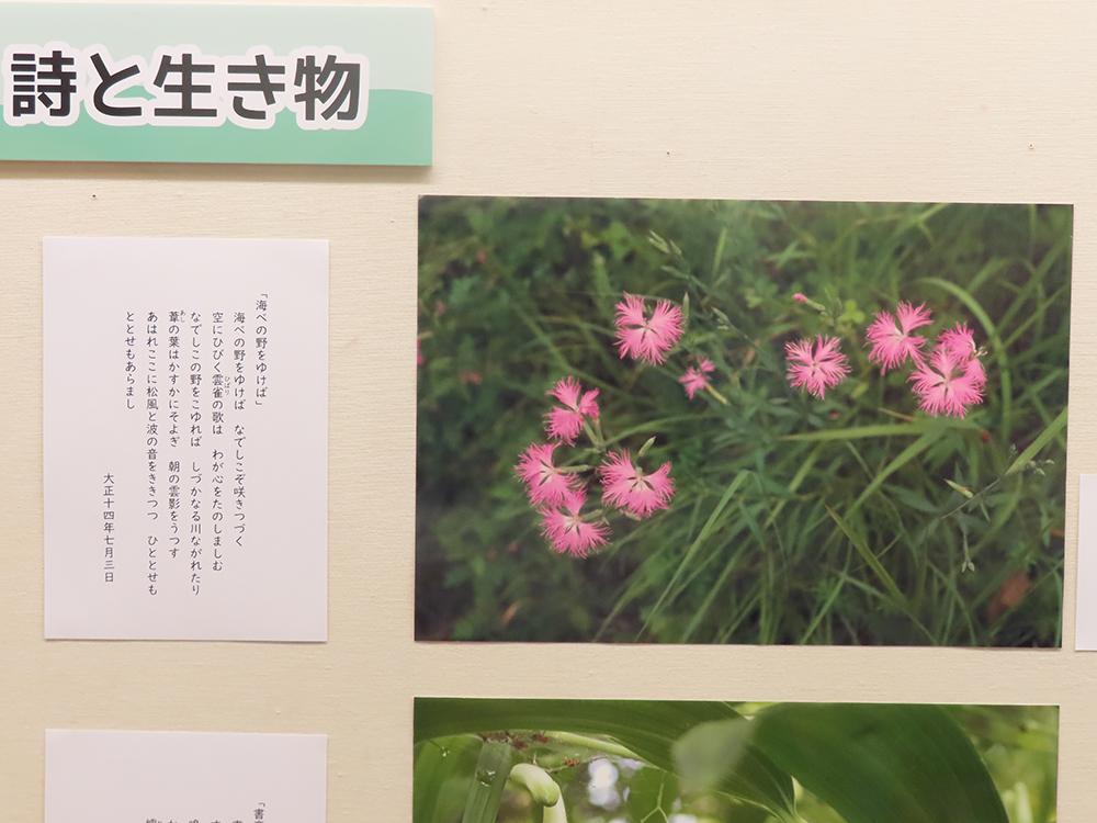 展示の様子。カワラナデシコの写真と詩のパネル。